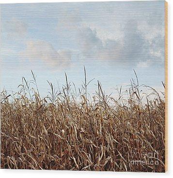Wood Print featuring the photograph Closeup Of Corn Stalks  by Sandra Cunningham