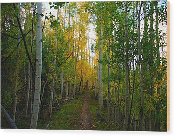 Colorado Fall Hike Wood Print by Michael J Bauer