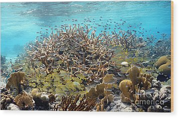 Colorful Tropical Reef Wood Print