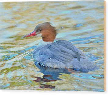 Common Merganser Wood Print by Kathy King
