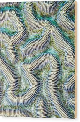 Coral Maze Wood Print by Jean Noren