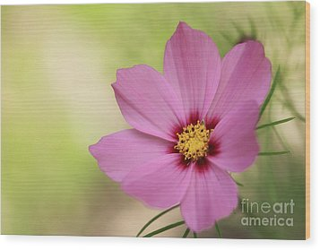 Cosmos... Wood Print by LHJB Photography