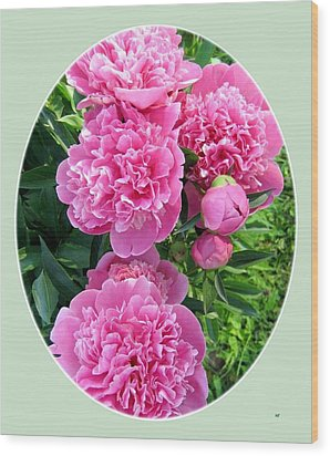 Country Peonies Wood Print by Will Borden