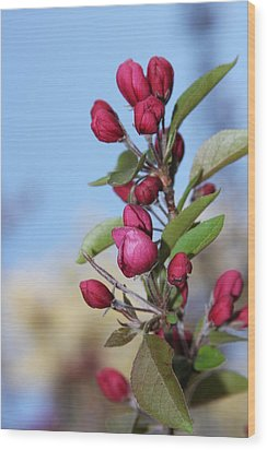 Crabapple Blossoms Wood Print by Vadim Levin
