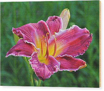 Crimson Day Lily Wood Print