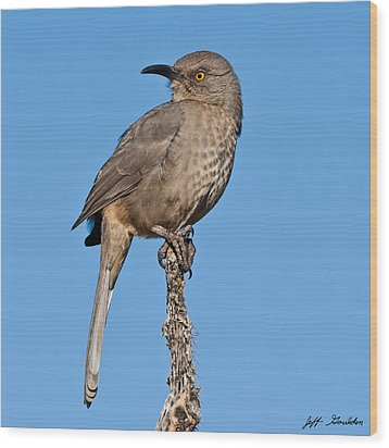 Curve-billed Thrasher Wood Print by Jeff Goulden