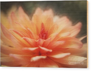 Dahlia Blooming Wood Print by LHJB Photography