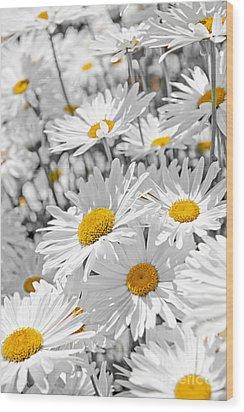 Daisies In Garden Wood Print by Elena Elisseeva