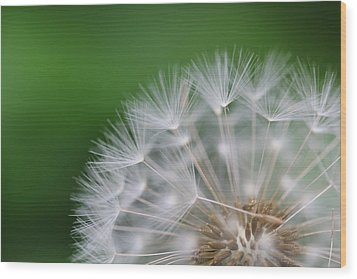 Dandelion Wood Print by Tilen Hrovatic