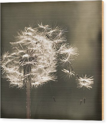 Wood Print featuring the photograph Dandelion by Yulia Kazansky