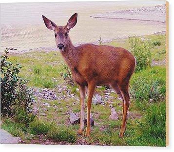 Deer Visit Wood Print
