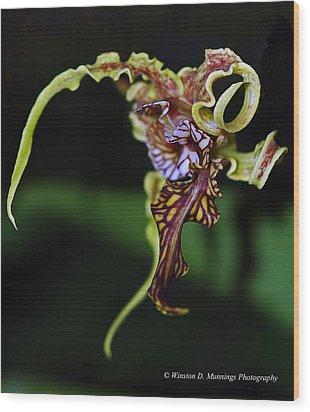 Dendrobium Spectabile Wood Print