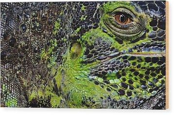 Details Iguana Wood Print