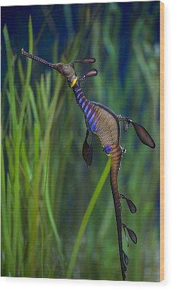 Dragon Seahorse Wood Print by Diego Re