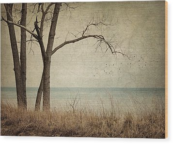 Drifting Wood Print by Amy Weiss