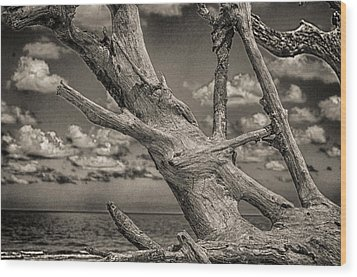 Driftwood Wood Print by J Riley Johnson