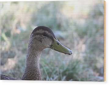 Duck - Animal - 01134 Wood Print by DC Photographer