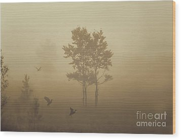 Early Morning Canaan Valley Wood Print by Dan Friend