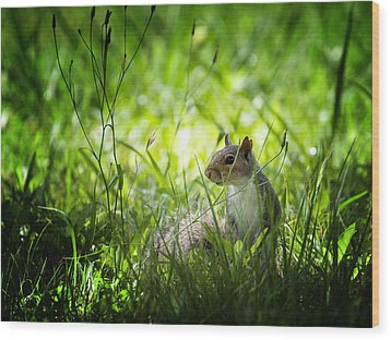 Wood Print featuring the photograph Eastern Gray Squirrel by Zoe Ferrie