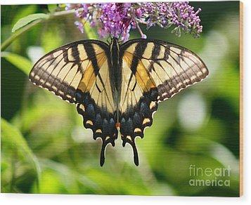 Eastern Tiger Swallowtail Butterfly Wood Print by Karen Adams