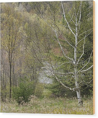 Easton Mountain Trees And Pond Wood Print by John Arnaldi