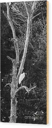 Egret Wood Print by Steven Ralser