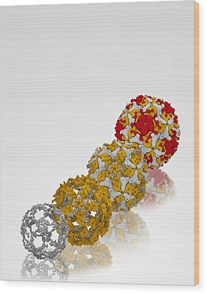 Enterovirus Capsid Proteins Structure Wood Print by Science Photo Library