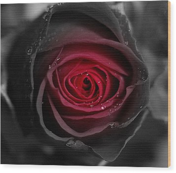 Eternally Yours Rose Wood Print