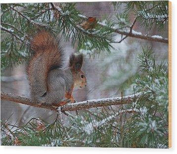 Eurasian Red Squirrel Wood Print by Jouko Lehto