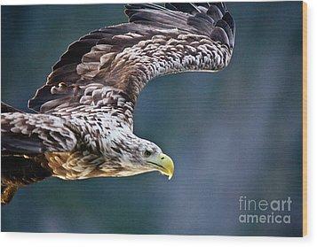 European Sea Eagle Wood Print by Heiko Koehrer-Wagner