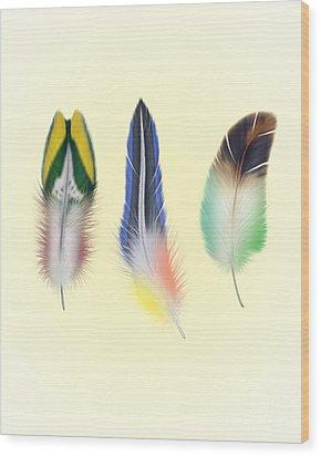 Feathers Wood Print by Mark Ashkenazi