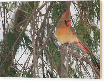 Female Cardinal Wood Print by Everet Regal