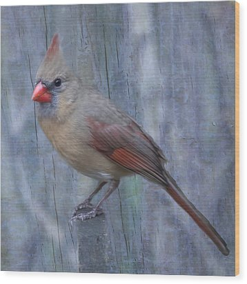 Female Cardinal Wood Print by John Kunze