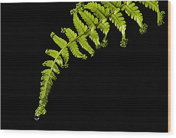 Wood Print featuring the photograph Fern With Raindrop by Trevor Chriss