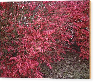 Wood Print featuring the photograph Fire Bush by Pete Trenholm
