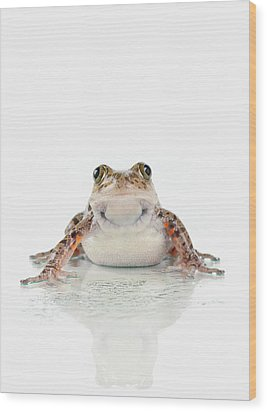 Fire-leg Walking Frog On White Wood Print by Corey Hochachka