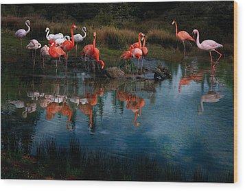 Flamingo Convention Wood Print by Melinda Hughes-Berland