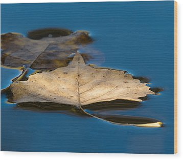 Floating Wood Print by Beverly Parks