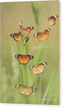 Flock Of Plain Tiger Danaus Chrysippus Wood Print by Alon Meir