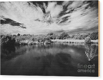 Flooded Grasslands And Mangrove Forest In The Florida Everglades Usa Wood Print by Joe Fox