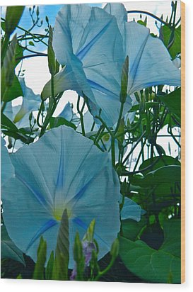 Floral Fantasy Wood Print by Randy Rosenberger