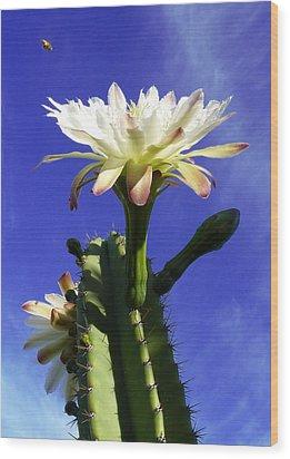 Flowering Cactus 3 Wood Print by Mariusz Kula