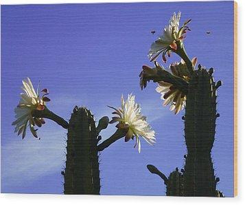 Flowering Cactus 4 Wood Print by Mariusz Kula
