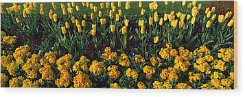 Flowers In Hyde Park, City Wood Print by Panoramic Images