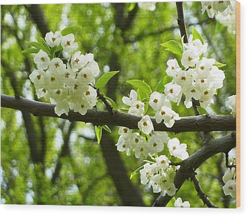 Wood Print featuring the photograph Flowers In The Spring by Mike Ste Marie