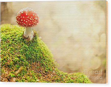 Fly Agaric Wood Print by Stefan Holm