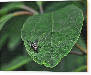 Fly On Leaf Wood Print
