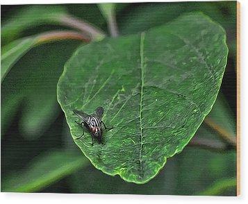 Fly On Leaf Wood Print by Jeffrey Platt