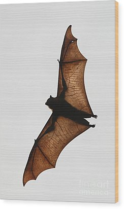Flying Bat Wood Print