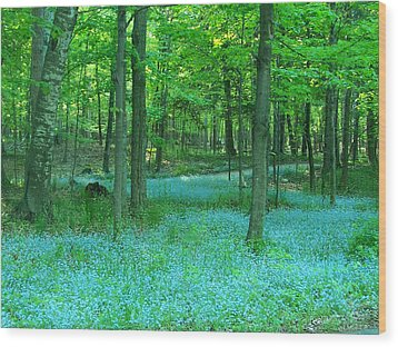 Forget-me-nots In Peninsula State Park Wood Print by David T Wilkinson